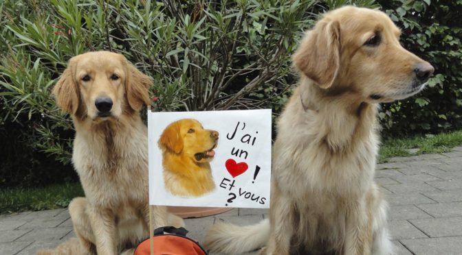 Unsere Hunde sind auch politisch aktiv