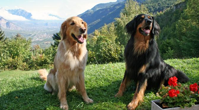 Hommage in Bildern auf zwei fantastische Hunde