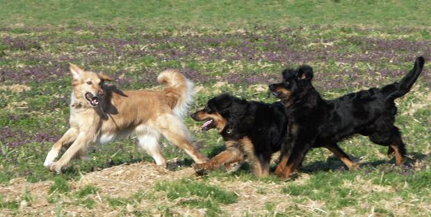 Vulco, Timon und Uyuni am Toben