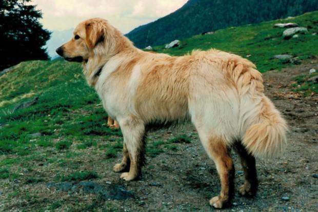 Erst 11 Monate alt und schon alleiniger Wächter über die Südtiroler Bergwelt!