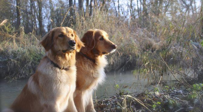 Was wir unter Hundezucht verstehen