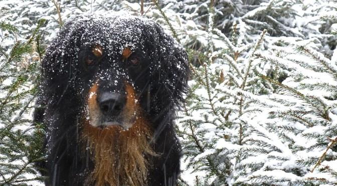 Wintergruss aus Tschechien