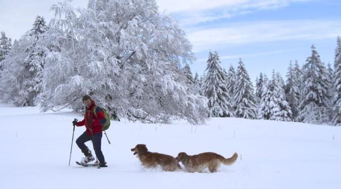 Mit Querida und Mapiri im Wintermärchen