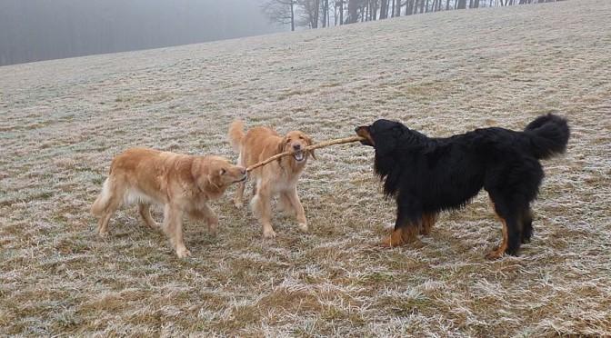 Mapiri trifft Arnie