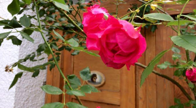 Adieu, Raïa Rose!