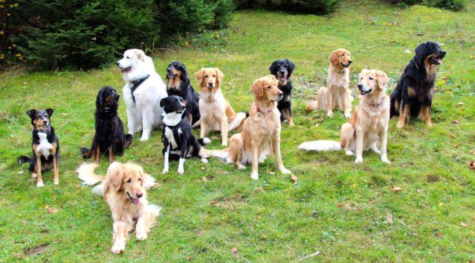 Mit der Hundeschule im Wanderwochenende