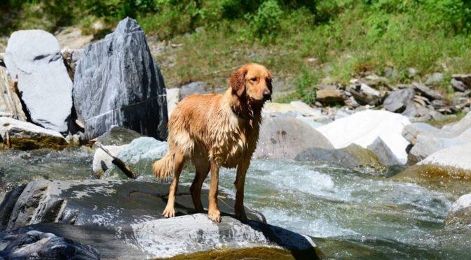 Luvita auf Wanderschaft im Valsertal