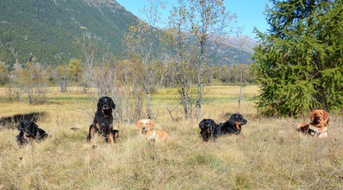 6 Alte Aarler in Celerina