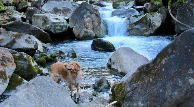 Zurück aus den Ferien in unserem Bergparadies