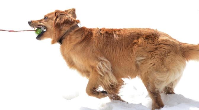 Luvita geniesst noch einmal den Schnee